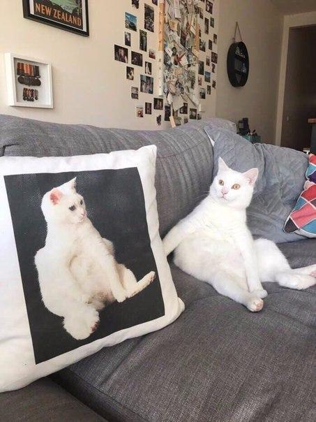 хочет, чтоб хештеги для фото кошек журналистки рассказали комсомольской